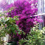 ogrod_botanioczny_09