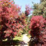 ogrod_botanioczny_11