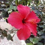 ogrod_botanioczny_18